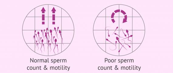 Cipkowski recommend Bdsm drawings female domination